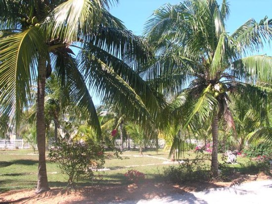 Palm lined gardens