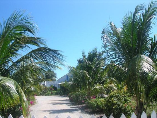 palm lined drive to house